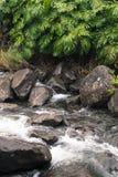 Iao-Tal-Nationalpark auf Maui Hawaii Stockfotografie