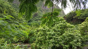 Iao valley jungle Royalty Free Stock Photos