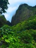 Iao Valley Maui Hawaii Jungle Landscape. Lush jungle plant growth hugs the mountainside at Iao Valley, Maui Royalty Free Stock Photography