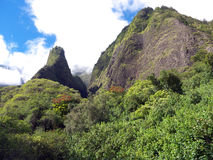Iao Valley mountains. In Maui Hawaii. Steep walls covered partially with luxuriant vegetation, blue sky with white clouds. Tropical vegetation, tree with red Stock Photos
