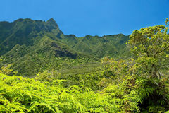Iao Valley State Park on Maui Hawaii Stock Image