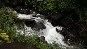Iao valley stream. White water over rocks Royalty Free Stock Photos