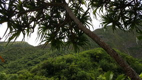 Iao valley. Western maui mountains Stock Photo