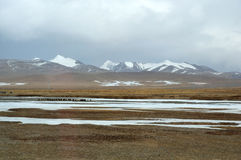 Iaques com lago congelado Fotos de Stock Royalty Free