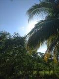 Iarda del Carib immagine stock libera da diritti