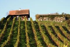 Iarda del vino Fotografie Stock