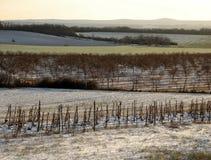 Iarda di coverd della neve Fotografia Stock Libera da Diritti