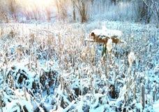 iarda rossa d'attaccatura di bianco degli S Fotografia Stock