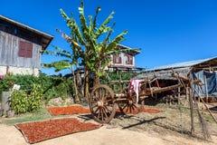 Iarda tribale del villaggio del Myanmar con il banano Fotografia Stock Libera da Diritti
