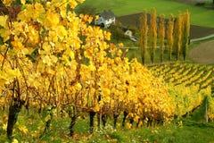 Iarde autunnali del vino Fotografia Stock Libera da Diritti