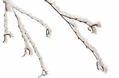Iarna. Winter snow cold fog frost branch silence Royalty Free Stock Photo