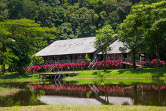 Traditional wooden houses and bushes of red color. Iban longhouse Kuching to Sarawak Culture village. Malaysia. Iban longhouse. Traditional wooden houses and Royalty Free Stock Photos