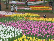 Ibaraki, Giappone 16 aprile 2018: I turisti sono tulipani pieni d'ammirazione dentro Fotografie Stock Libere da Diritti