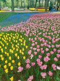 Ibaraki, Japão 16 de abril de 2018: Os turistas estão admirando tulipas dentro Imagens de Stock Royalty Free