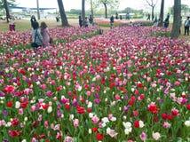 Ibaraki, Japão 16 de abril de 2018: Os turistas estão admirando tulipas dentro Foto de Stock Royalty Free