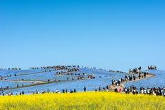 IBARAKI-JAPAN- 16-ое апреля: Красивый сезон холма kochias весной Стоковые Фотографии RF
