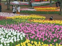 Ibaraki, Japan-April 16, 2018 : Tourists are admiring tulips in. Flower field, Mawatari, Hitachinaka, Ibaraki Prefecture, Japan royalty free stock photos