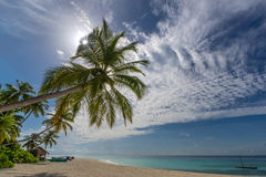 IBeautiful beach. View of nice tropical beach with palms around. Royalty Free Stock Photography