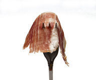 Iberian ham Royalty Free Stock Photos