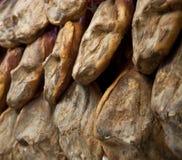 Iberian skinkor Arkivfoto