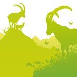 Ibex на горном склоне Стоковая Фотография RF