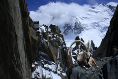 Ibex alps montblanc cliff  nature Royalty Free Stock Photos