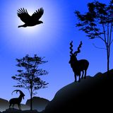 Ibex and eagle silhouette Royalty Free Stock Images