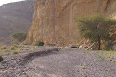Ibex Nubian идет в Nahal Shani, красный каньон около Eilat Стоковые Фото