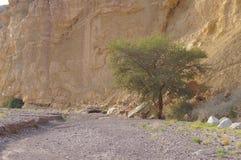 Ibex Nubian идет в Nahal Shani, красный каньон около Eilat Стоковые Изображения RF