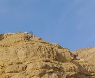Ibex Nubian идет в Nahal Shani, красный каньон около Eilat Стоковые Изображения