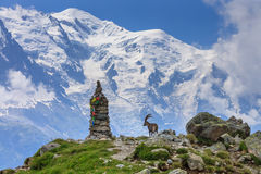 Ibex, Range of Mont-Blanc, French Alps Royalty Free Stock Photo