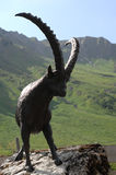 Ibex statue Royalty Free Stock Image