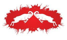 Ibexes Fighting Stock Image