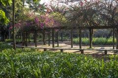 Ibirapuera Park lizenzfreies stockbild