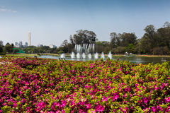 Ibirapuera Park and Sao Paulo Obelisk. Sao Paulo, Brazil.18 September 2016. Ibirapuera Park in Sao Paulo, with the first flowers of early spring. In the Royalty Free Stock Photos