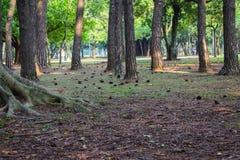 Ibirapuerapark São Paulo April vijfentwintigste royalty-vrije stock fotografie