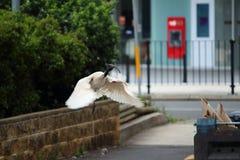 ibis Imágenes de archivo libres de regalías