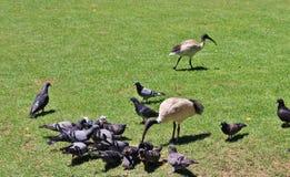 ibis Images stock