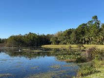 white swamp birds stock photos