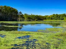 Florida swamp stock photos