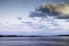 Ibis en vuelo en la puesta del sol fotos de archivo