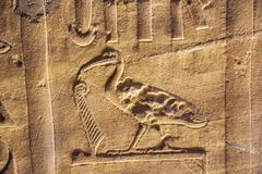 An ibis in an hieroglyph in the temple of Horus. In Edfu stock photos
