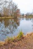 Ibis lake in winter stock images