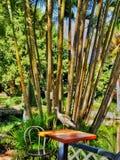 Ibis na stole fotografia royalty free