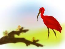 ibis scarlett royaltyfri illustrationer