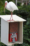 Ibis standing over seed vending machine Stock Photos