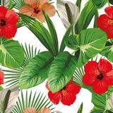 Ibisco e fondo tropicale di bianco delle foglie Fotografia Stock