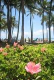Ibisco Hawai 07 Fotografia Stock Libera da Diritti