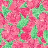 Ibisco rosa Fotografia Stock