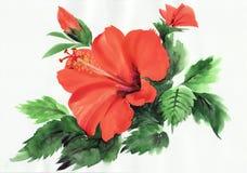 Vector l 39 illustrazione del ramo di albero del fiore con i for Ibisco rosso